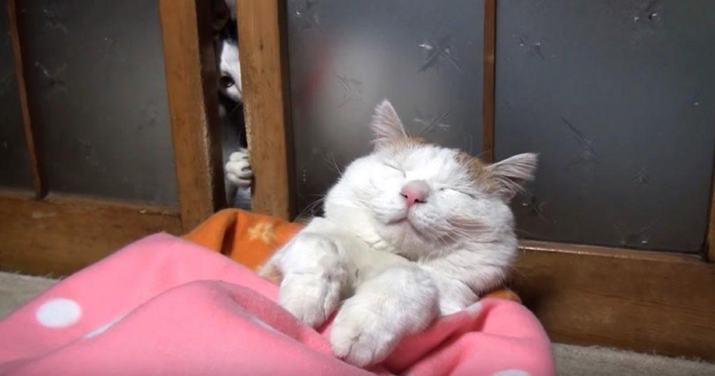 気持ち良さそうに眠る「カリン様」みたいな猫。仲間猫が「開けて」とお願いすると、寝ぼけまなこで思いもよらぬ行動に出て可愛すぎた笑