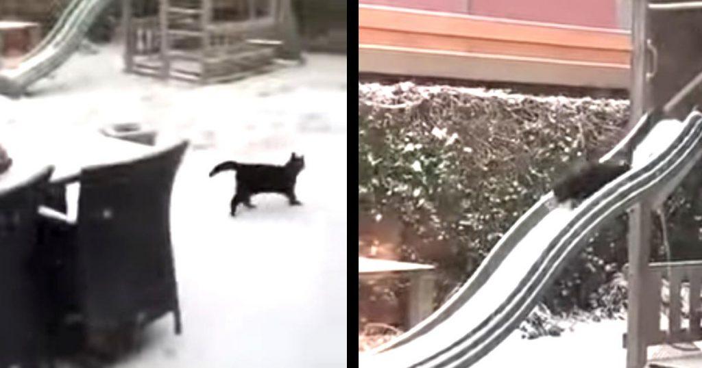「最高ニャー!」雪を見てテンションMAXの猫。大興奮で滑り台を何度も滑る姿が可愛すぎると話題に!
