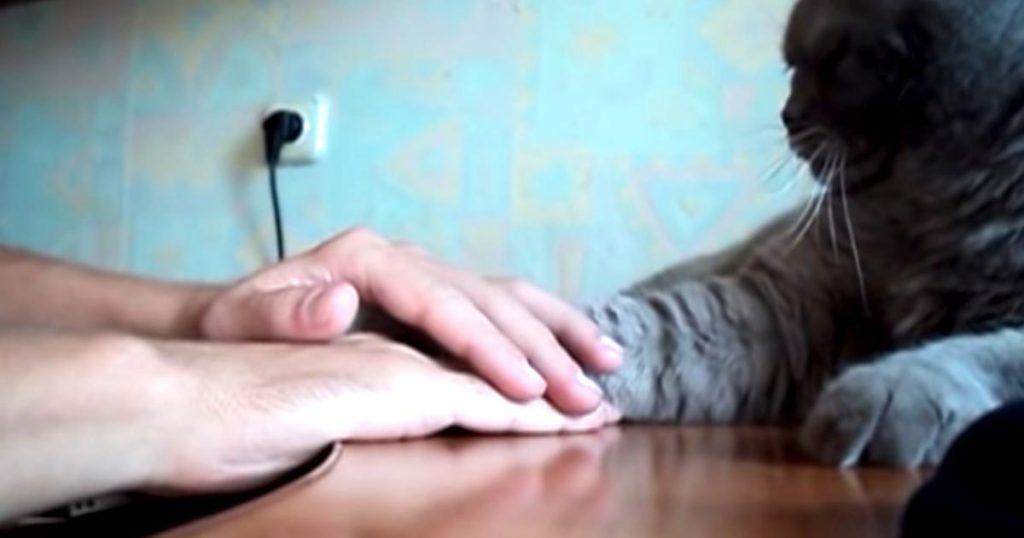 どうしても飼い主さんより上に手を置きたい負けず嫌いな猫。飼い主さんが反則技を使ったら、思いもよらぬ行動に出た笑
