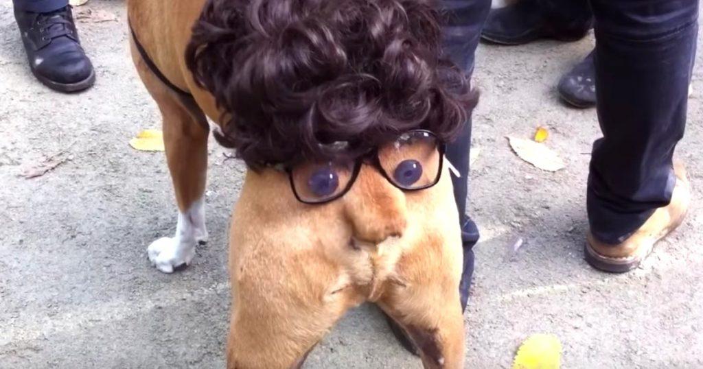 「鼻」が超可愛い動きをする、ハロウィンで目撃された犬の仮装が最高すぎる笑