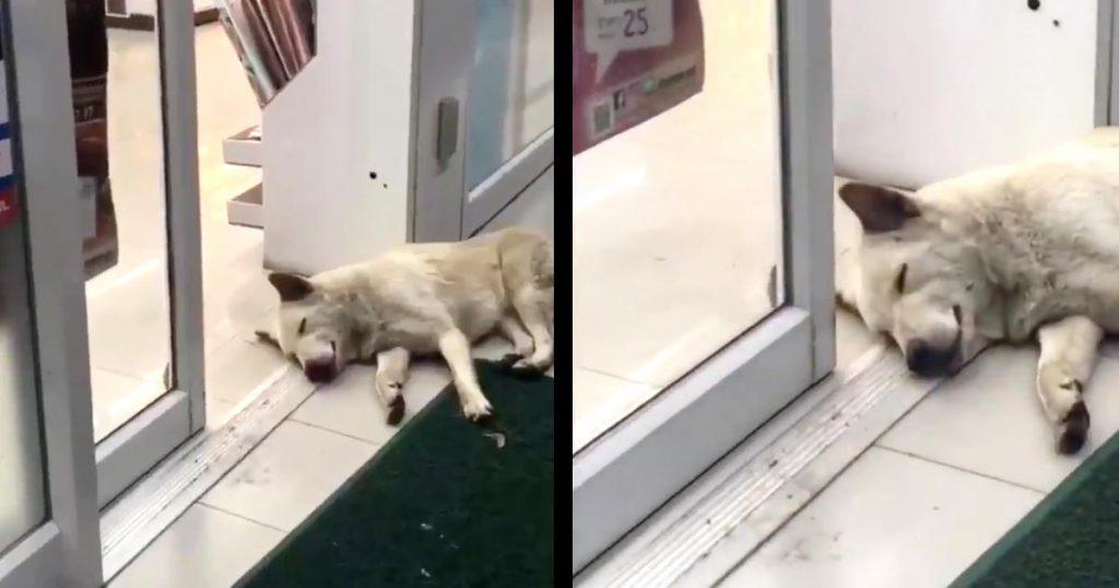 自動ドアの近くで寝ていた犬。ちょうど顔の位置にドアが閉まってきてとんでもない表情になってしまい世界中で話題に