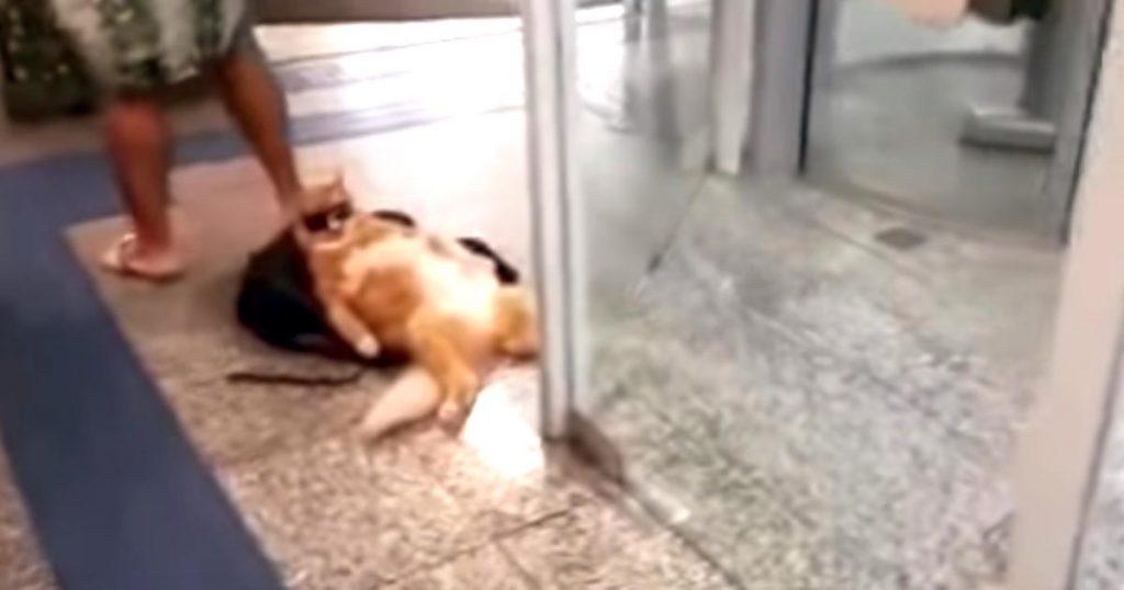ボス感がスゴい!銀行でふてぶてしい態度でリラックスする猫が目撃され話題に笑