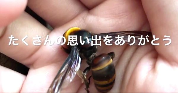 生まれた時から一緒。飼い主さんにとても慣れたスズメバチの一生をまとめた動画に泣いたと話題に「スズメバチに対する考え方が変わった」などの声