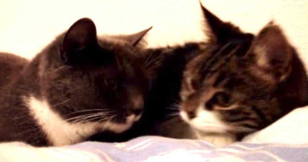 突然猫語で会話を始めた猫に様々な憶測!「おそらく世界征服を企んでいる」「世界経済について議論している」などの声が寄せられる!