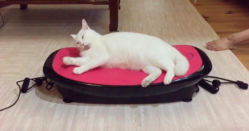 振動マシンの上で寝る猫。電源を入れたら焦って逃げるかと思いきや、思いもよらぬ反応をして爆笑!