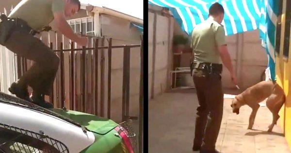 シートに絡まった子犬をフェンスを乗り越え助けた警官。すると、犬が思いっきり「ありがとう!」と感謝を伝える行動に出て話題に!