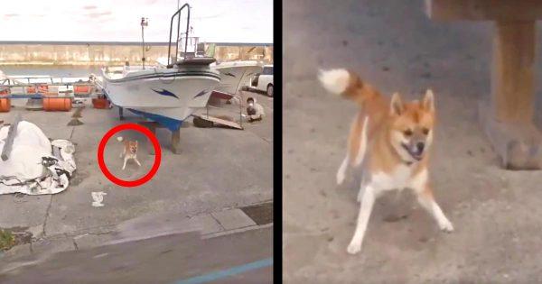 「幸せな気持ちになった」グーグルマップに写っていた日本の犬の行動が可愛いすぎると海外で話題に笑