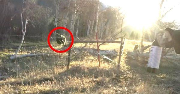 子連れの巨大母熊と目が合った瞬間向かってきた!「ベアスプレー」が大活躍する動画が話題に!
