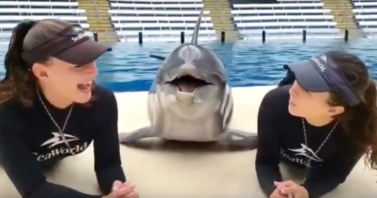 綺麗なお姉さんにチューされてテンションMAXのイルカが可愛すぎると話題に!