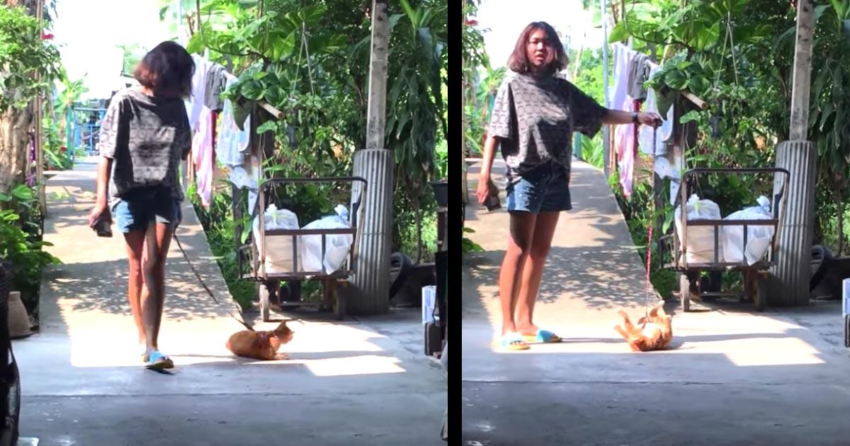 「亀猫だ!」帰るのを断固拒否する猫。飼い主さんが引っ張ったら可愛すぎることになって話題に笑