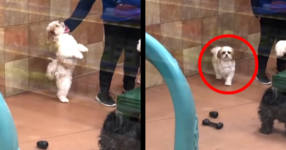預けていた犬を引き取りに行ったら、飼い主さんを見た瞬間、可愛すぎるリアクションをしたと話題に!