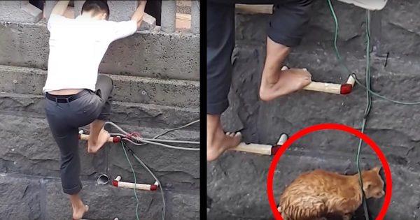 【長崎】川に落ちた猫、スーツ姿の無名のヒーローが救助し話題に!その後の謙虚な行動に「かっこいい」の声!