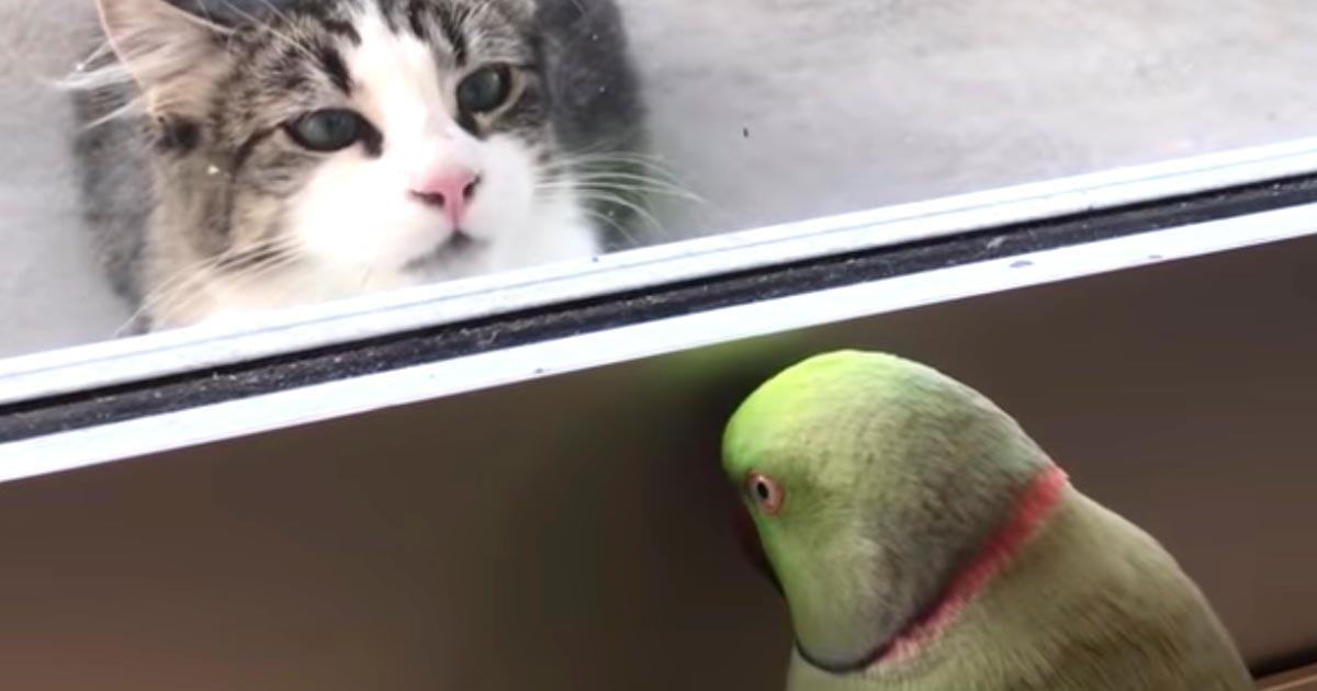 「なんて可愛くて楽しいビデオだ!」猫に「いないいないばあ」をして反応を楽しむオウムが話題に笑