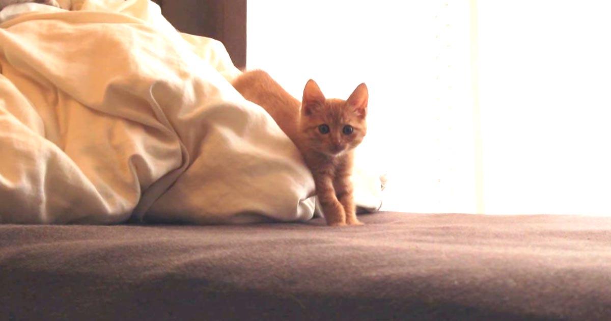 「おいで〜」子猫を呼んだら、可愛すぎる行動をしてキュンキュン!