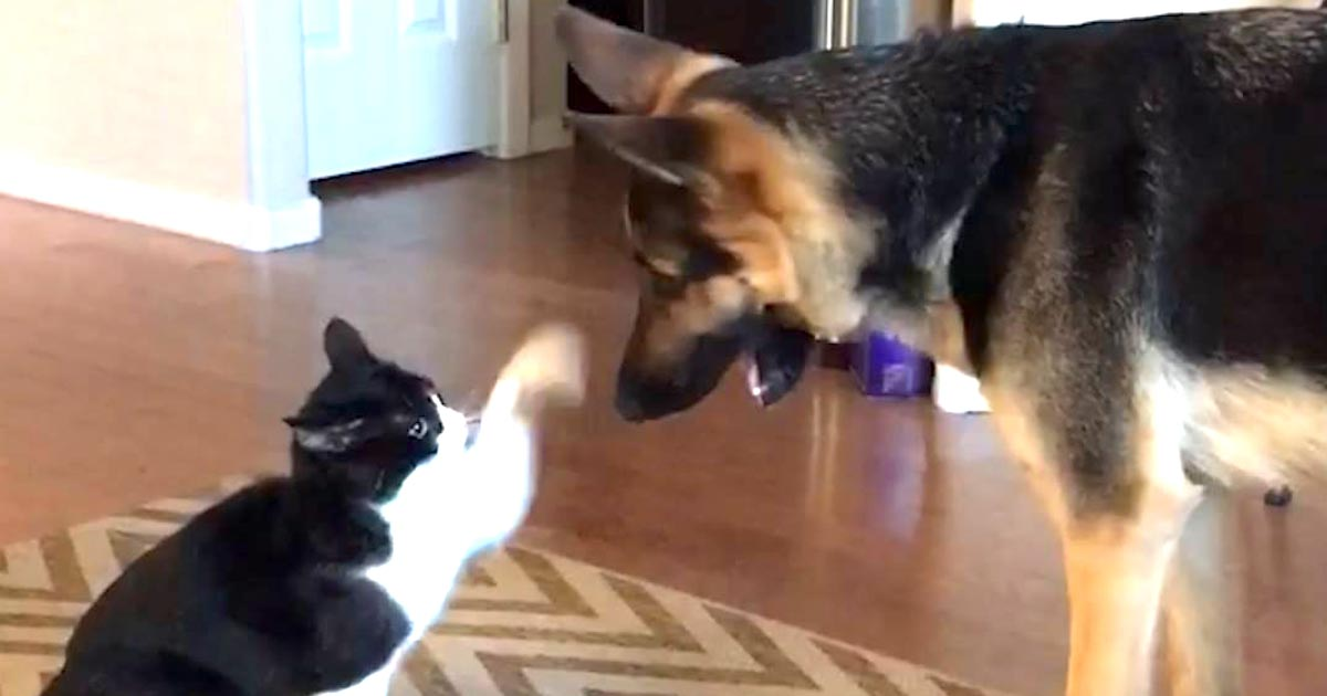 ケンカしていた犬と猫。しかし最後に可愛すぎる仲直りをした!こんな可愛い仲直りのやり方は初めて見た笑