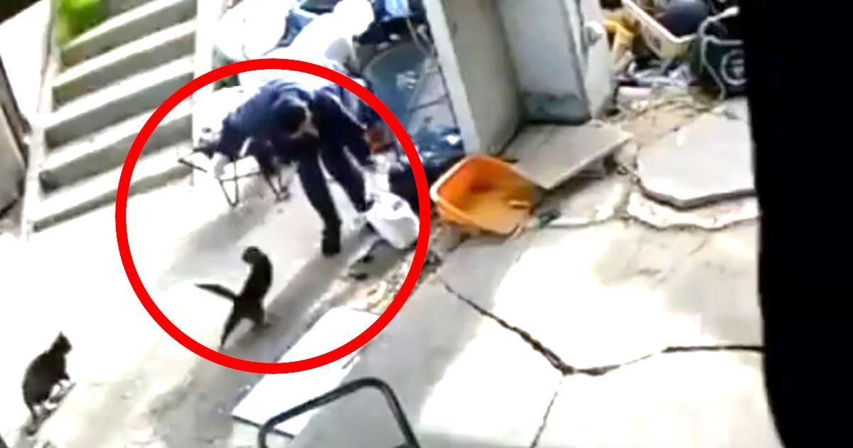 【三重】男に連れ去られていた猫、発見され無事飼い主さんの所に戻る!飼い主さんは毎日数時間捜索、男は逮捕!