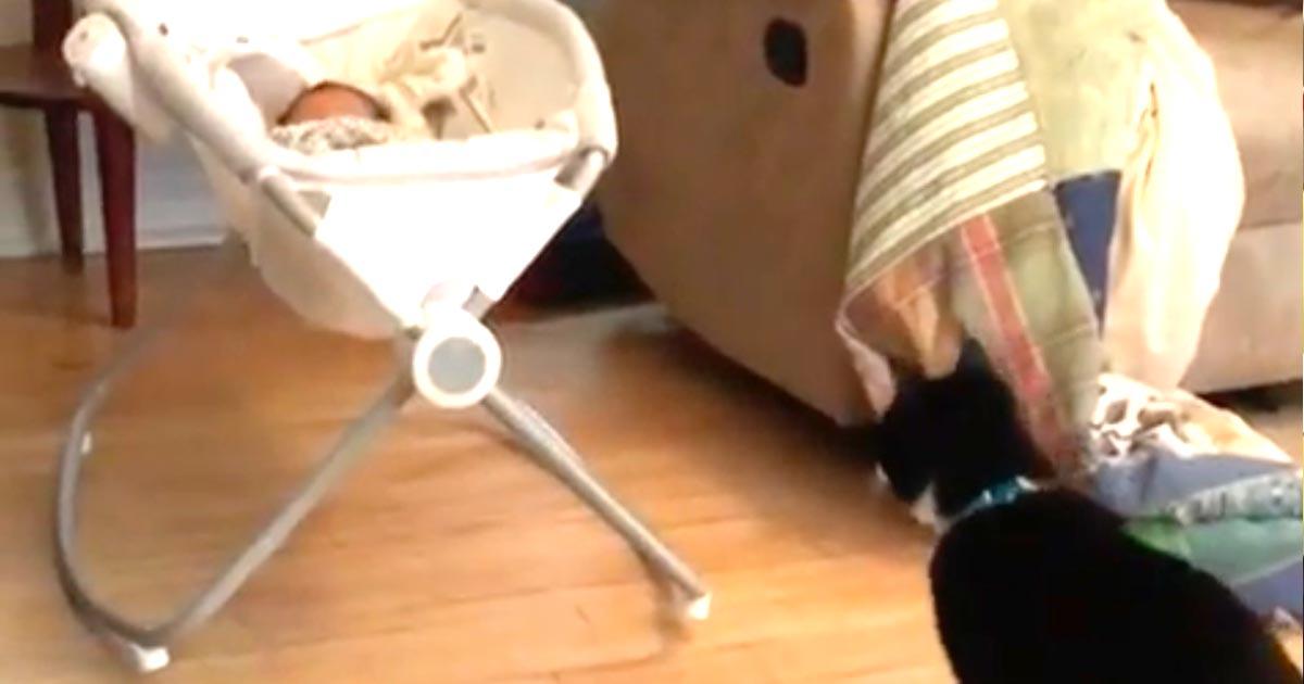 「これは一体何にゃー!」初めて赤ちゃんを見た猫の反応が可愛すぎると話題に!
