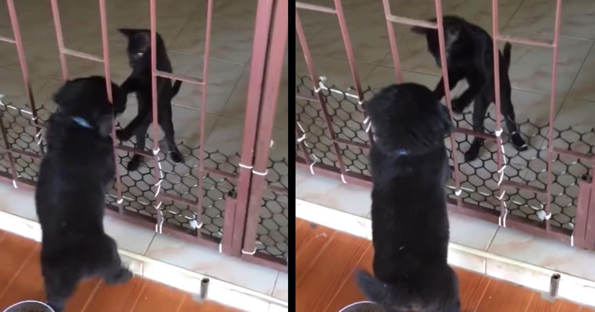 子犬の脱走を手伝ってあげる猫の友情が素晴らしいと世界中で話題に!まるで動物アニメのよう!