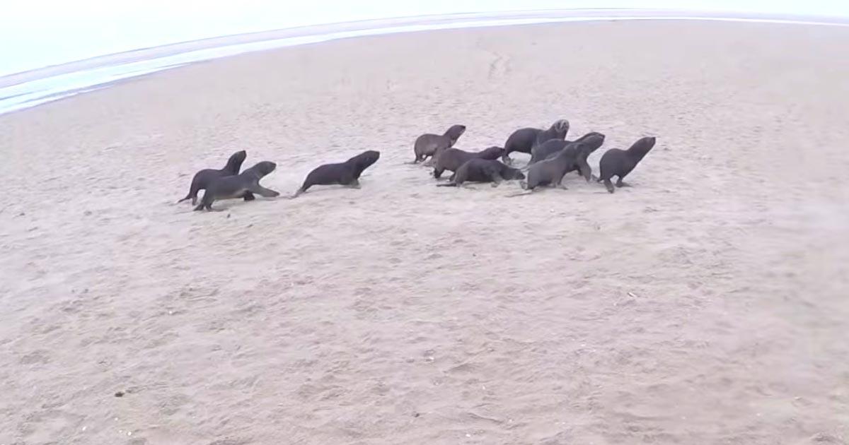 砂浜で逃げるアザラシを捕まえる男性。捕まえられたアザラシを見た瞬間、男性の行動の意味を理解しハッとする