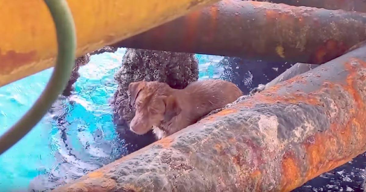 【奇跡】よくぞ生きていた!海岸から220km沖を泳いでいた犬が救助され話題に!