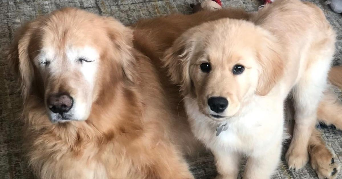 【深い絆】目が見えなくなり、大好きだった遊びもやめふさぎ込んでいた犬。しかし、やってきた小さな親友は彼の犬生に彩りを取り戻させた!