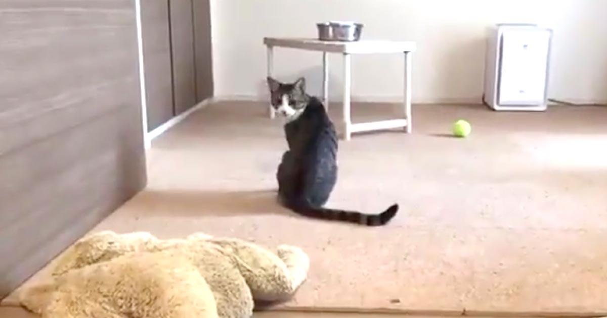 ある日突然自分のシッポの存在に気づいた猫の反応が可愛すぎると話題に!