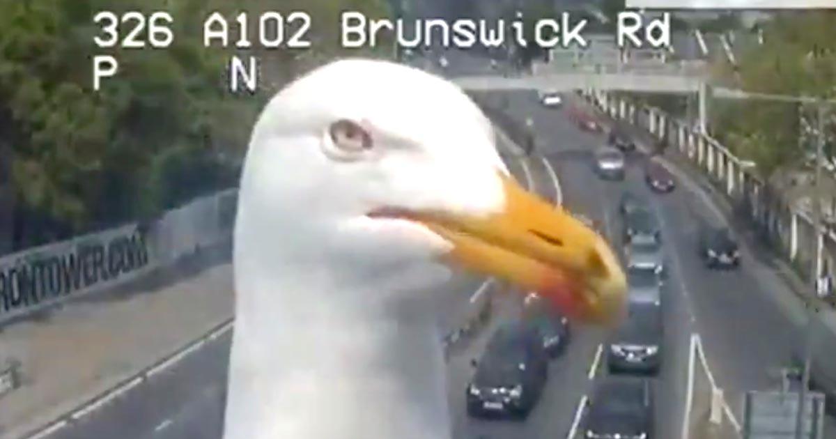 鋭いにらみを利かせ、渋滞を監視するカモメ。ロンドン交通当局のコメントがナイスだと話題に!