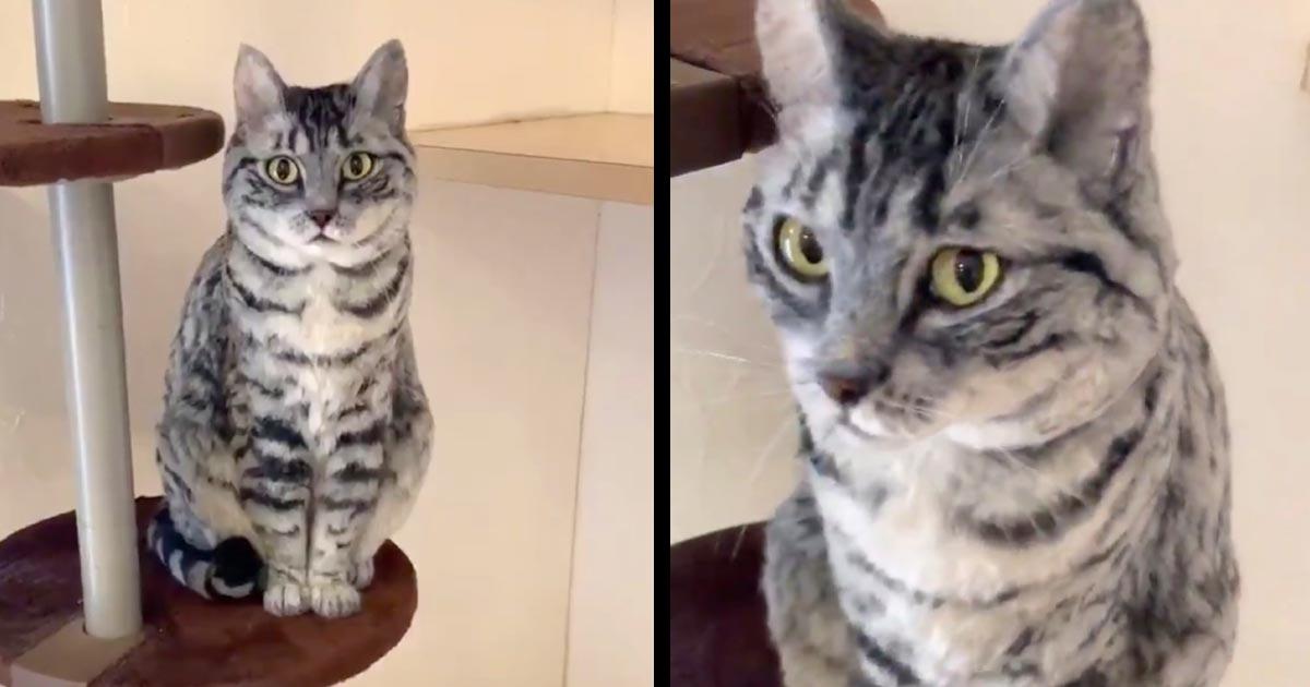 どこに移動しても目だけがこっちを見てくる猫。説明を読んでびっくりする人続出!