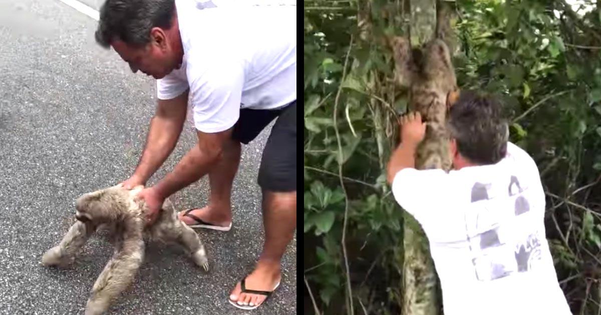 道路にいたナマケモノを助けてあげた男性。すると、「ありがとう」と笑顔で感謝の気持ちを伝えてきて話題に!