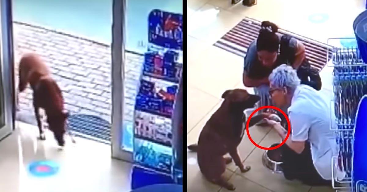 薬局にやってきた野良犬。エサをあげても食べずに「お手」をするので不審に思ってよく見ると、重要なことが判明!