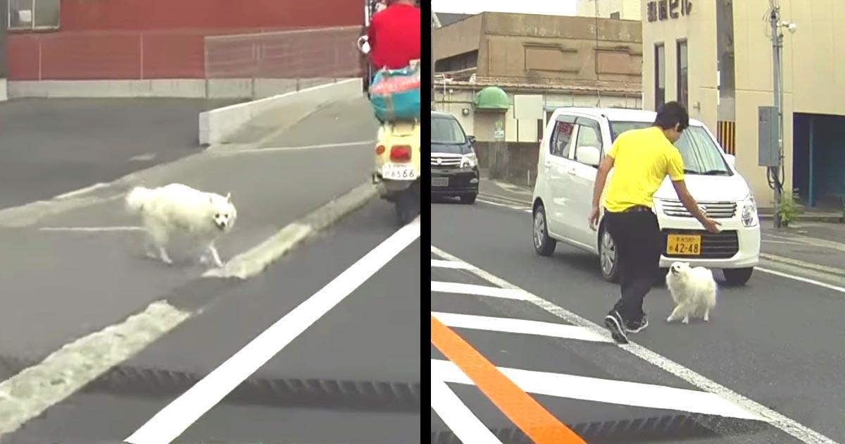 【神対応】道路に飛び出してきた犬を、車を止めて救出する男性!他のドライバーの対応も優しい!