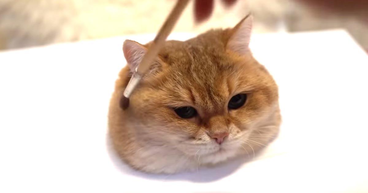 写真のような超現実的な猫の絵だと思ったら、全然違った笑