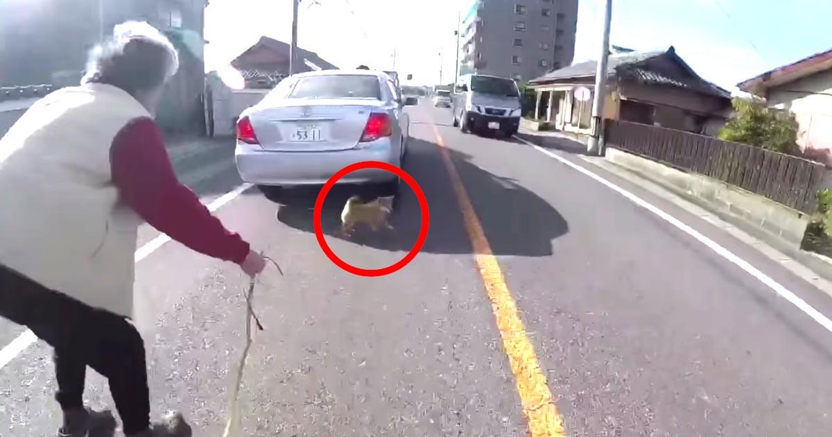 【神対応】車通りの激しい通りでお婆さんの家から脱走し、呼んでも戻ってこない子犬。しかし偶然居合わせたライダーのナイス対応で無事捕獲!
