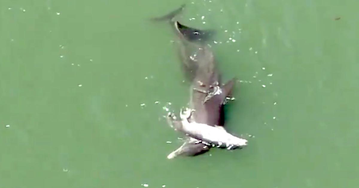 ボートに当たり亡くなってしまった赤ちゃんイルカと、現実を受け入れられない母イルカ。たった一つの救いに涙
