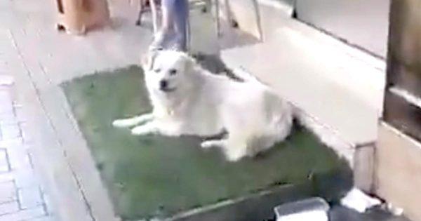 行方不明になっていた子犬が100km離れた街で奇跡的に発見!飼い主さんが迎えに行った時のリアクションに涙!