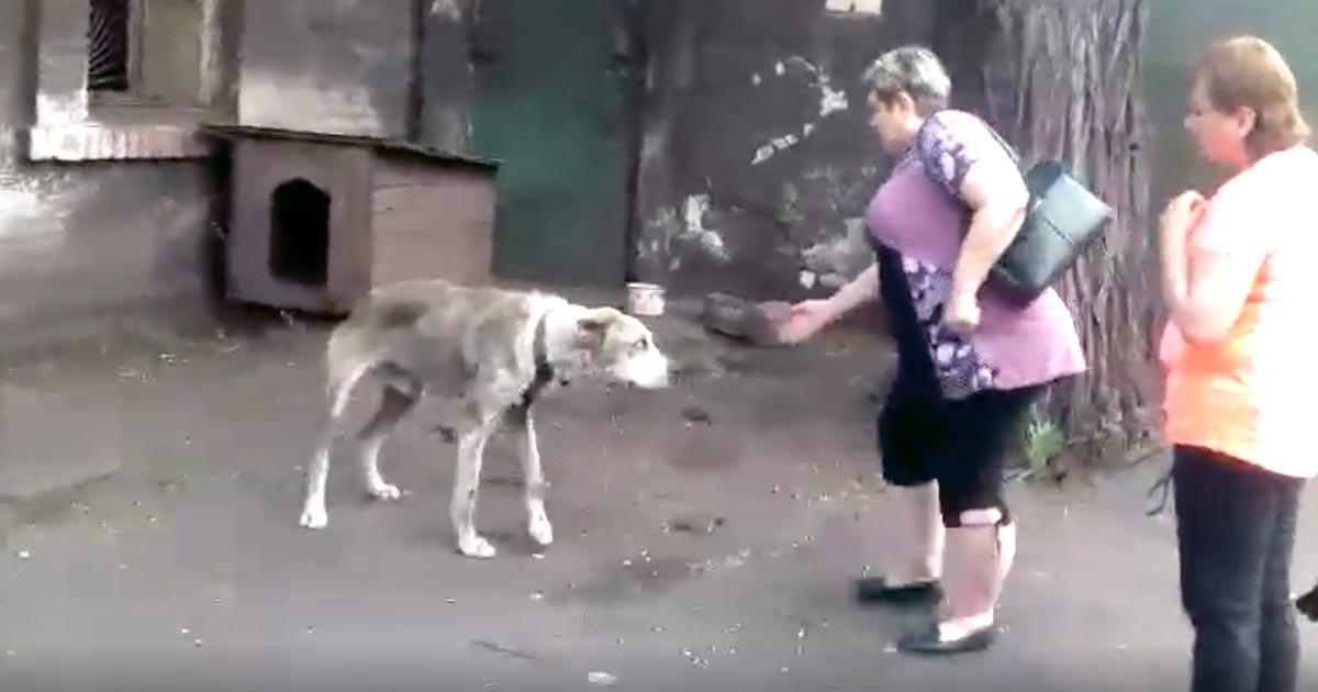 数年前に愛犬と離れ離れになったと主張し、野良犬を引き取りに来た女性。「本当なのか?」と疑ったスタッフが会わせてみると、一目瞭然だった!