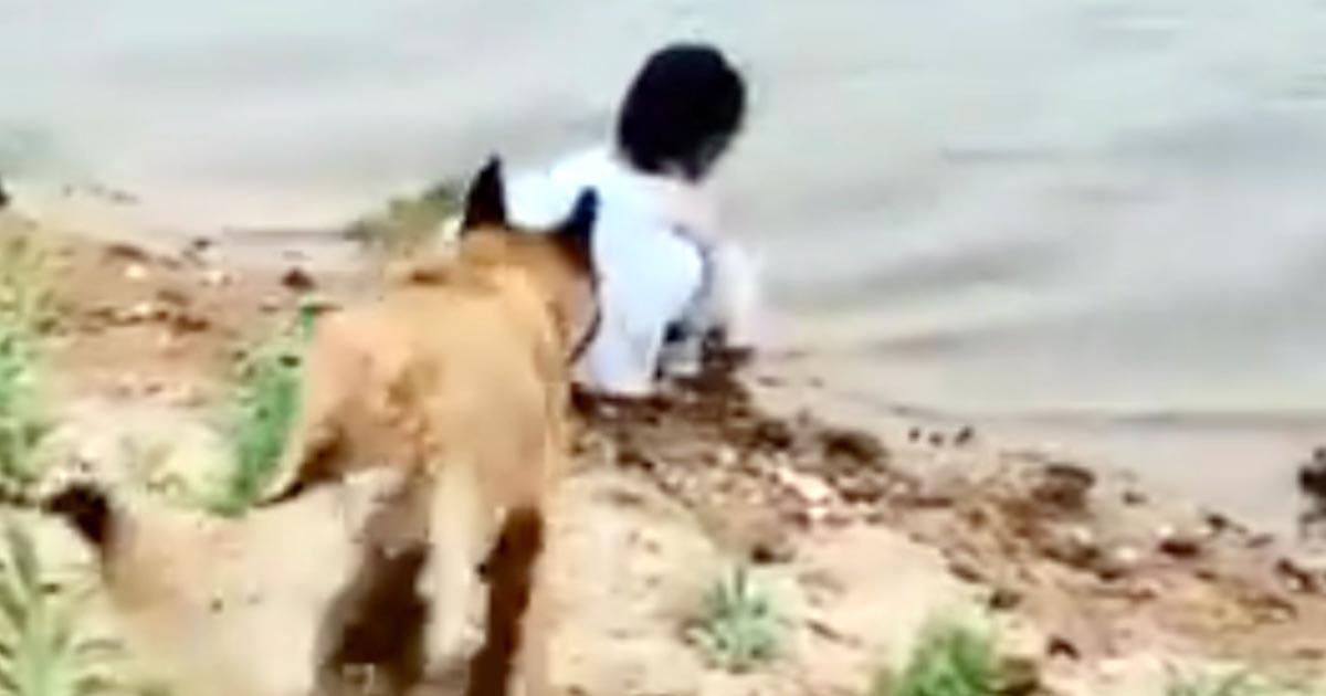 「この犬素晴らしすぎ!」川で遊ぶ少女を危険から守る犬がスゴいと話題に!ラストまで素晴らしい!