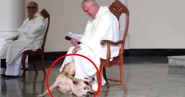 【神対応】礼拝の途中に一匹のイタズラ好きな犬が乱入!しかし司祭の対応が優しすぎたと絶賛される!