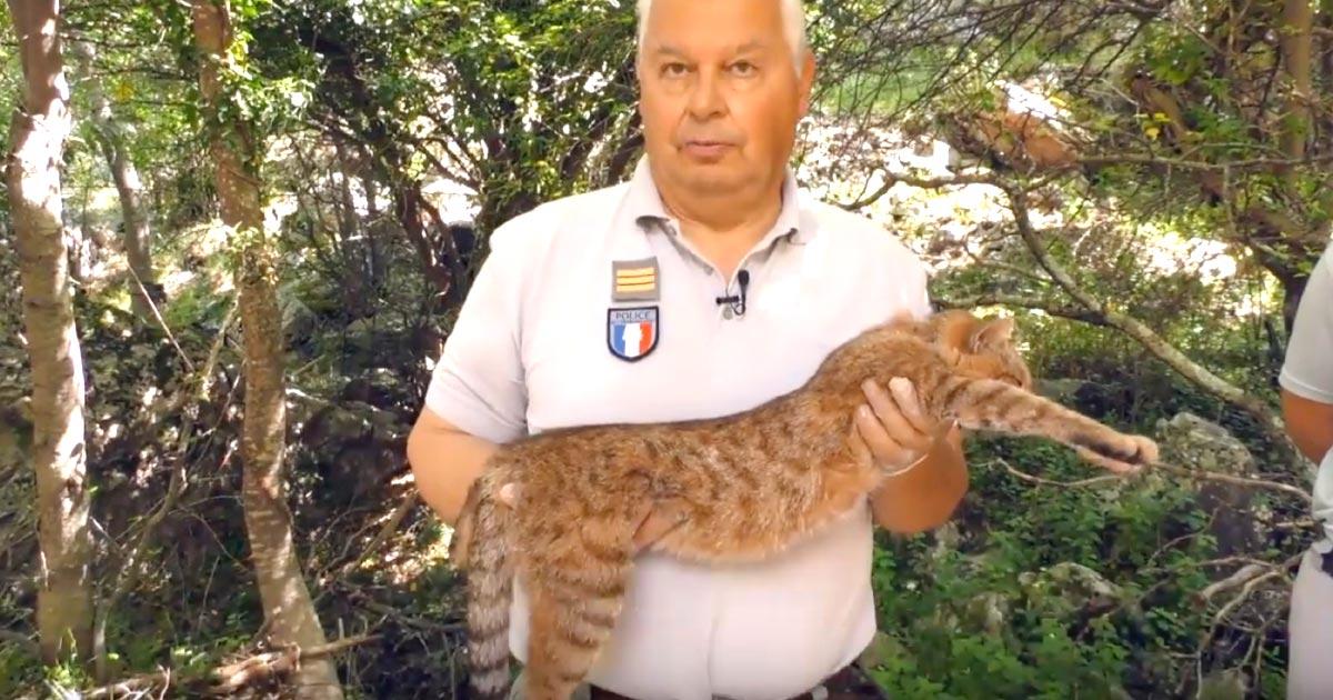 新種か?!コルシカ島で「ネコギツネ」が発見され話題に!