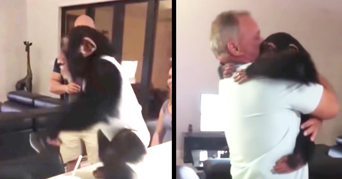 本当の親に育児拒否された自分を育ててくれた夫婦と久しぶりに再会したチンパンジーの反応に涙!