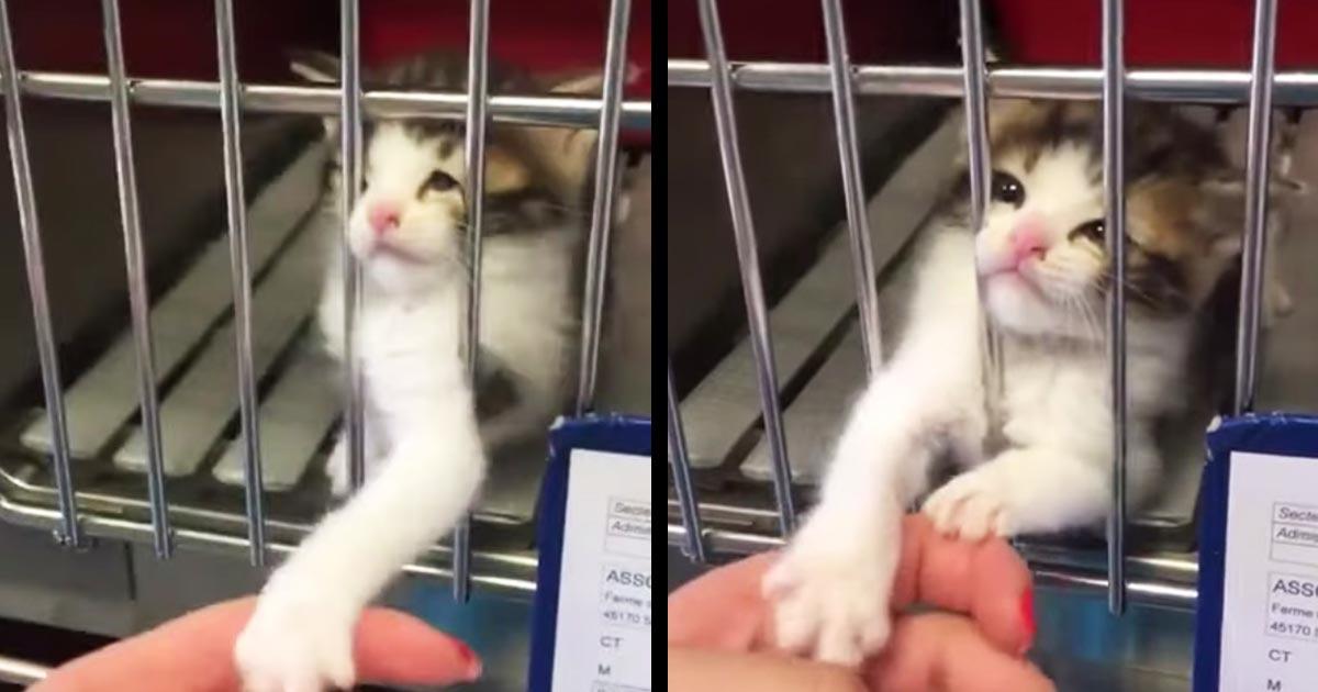 動物保護施設に行ったら「助けて!」と必死に訴えかける子猫と遭遇!これは無視できない