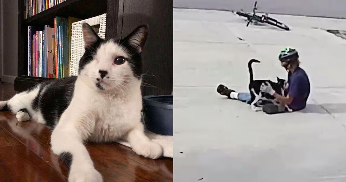片目が無く怖がられた猫。しかし防犯カメラの映像を見た飼い主さんは、毎日訪れる親友がいることを知り心を震わせた!