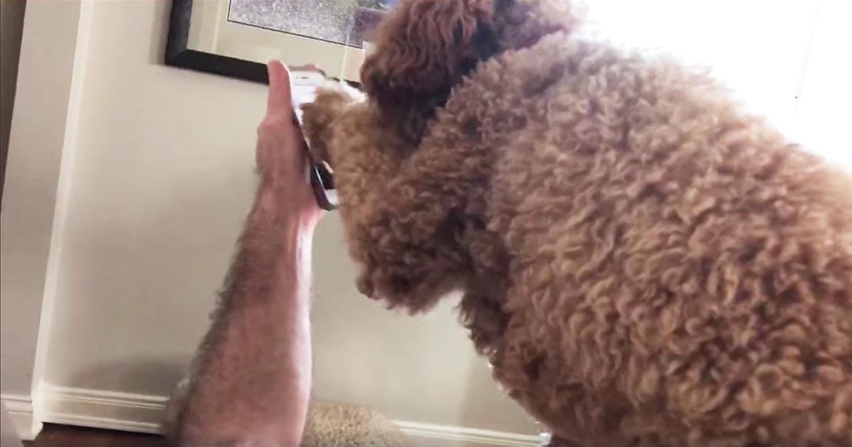 「大丈夫?」いつも一緒だった介助犬。ママが入院し、久しぶりにテレビ電話した時の反応が泣けると話題に!