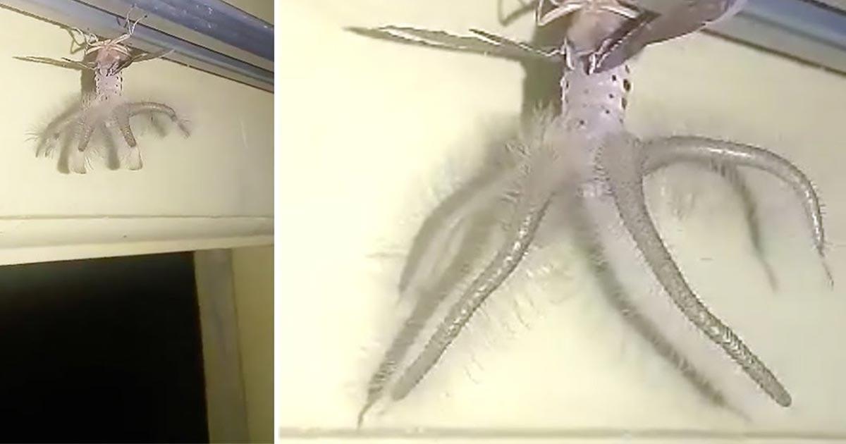 【鳥肌】民家の天井にキモすぎる生物がぶら下がっていて話題に!