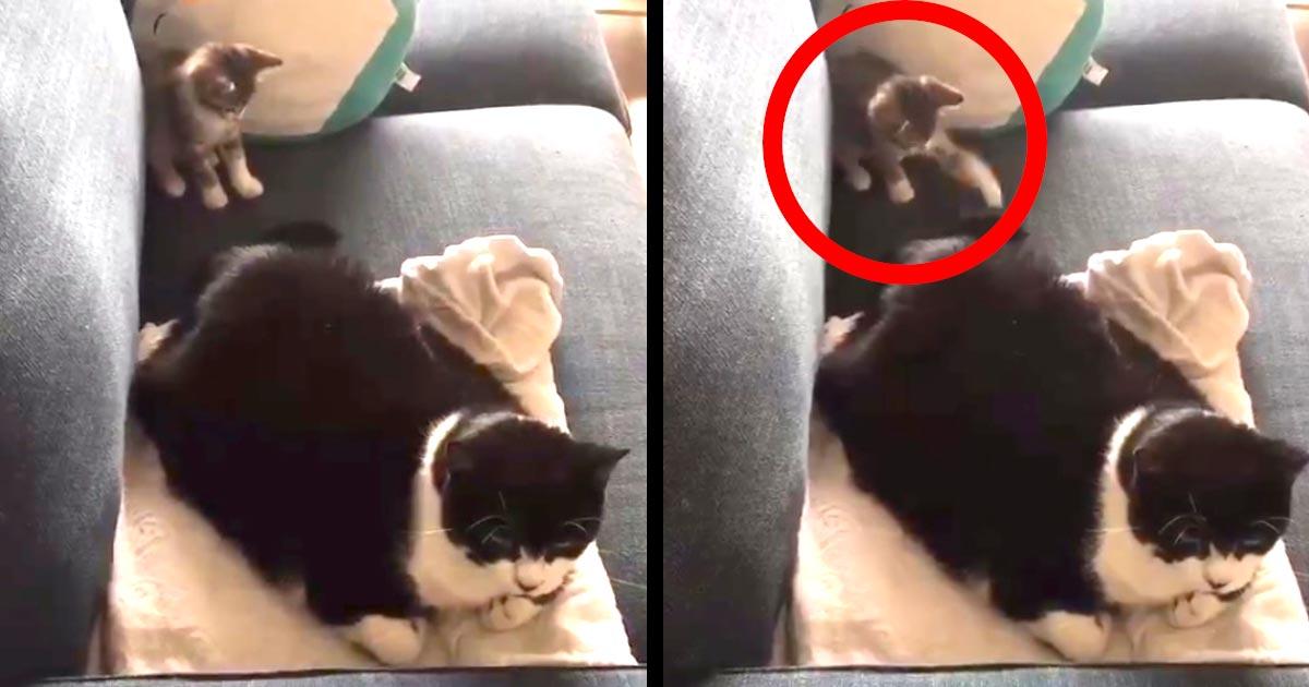 大先輩の猫にイタズラを仕掛けた子猫。しかし先輩猫のシッポにびっくり仰天して可愛すぎることになってしまい話題に!