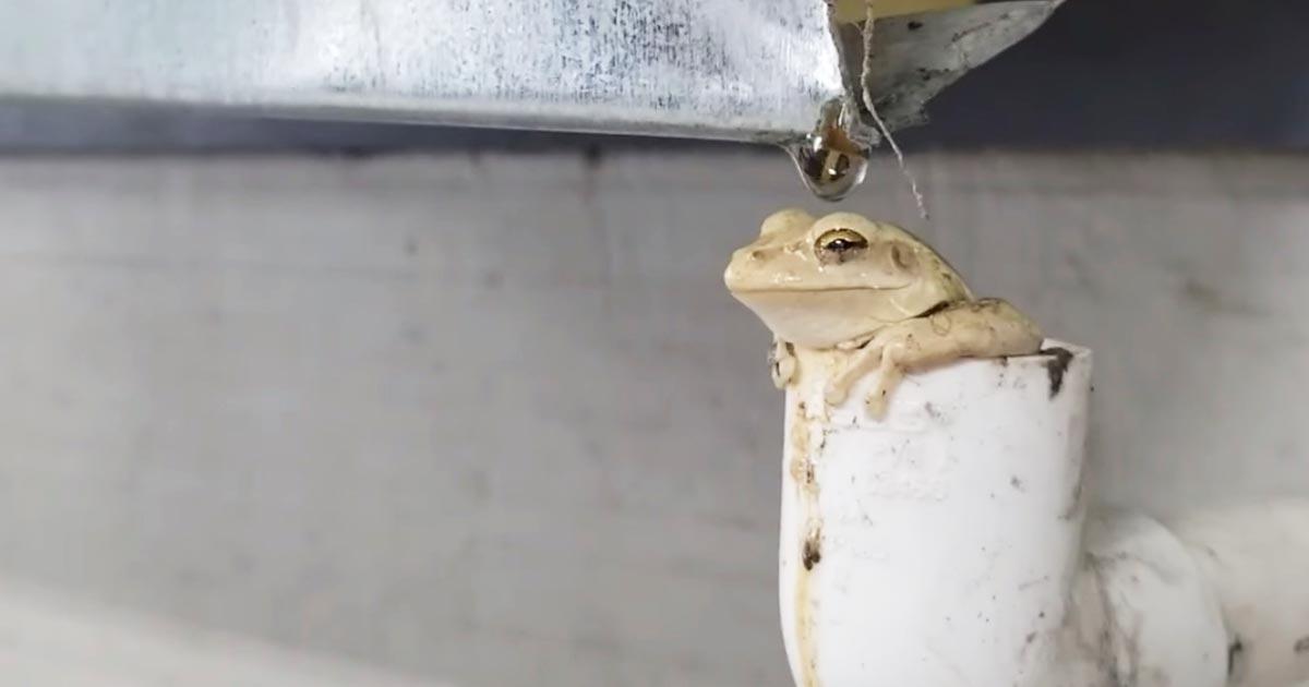 「カエルになりたい」意外な場所で気持ち良さげにくつろぐカエルが目撃され話題に!