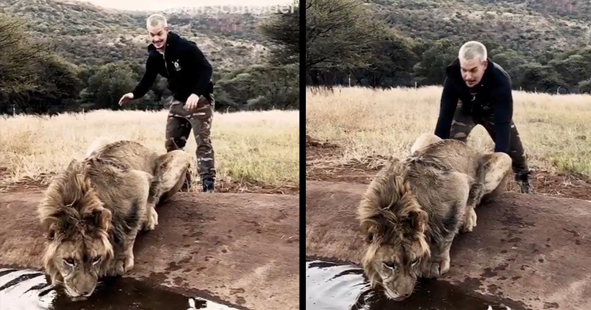 こっそりライオンの背後に近づきイタズラする男性。ライオンのリアクションが可愛い!