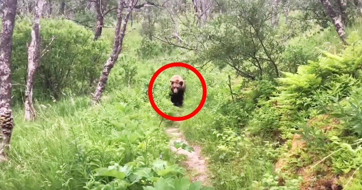 新婚旅行でハイキングしていたら巨大なヒグマと鉢合わせしてしまった動画が話題に!