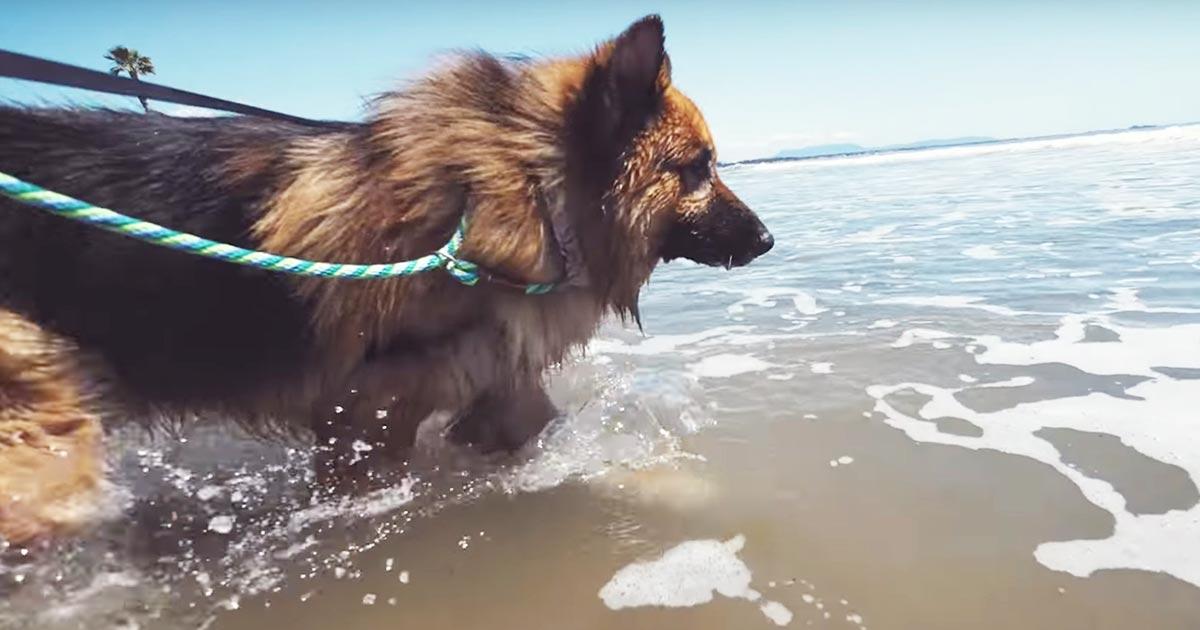 5年もの間クサリに繋がれ自由が無かった犬。救助され生まれて初めて海を見た反応に涙!