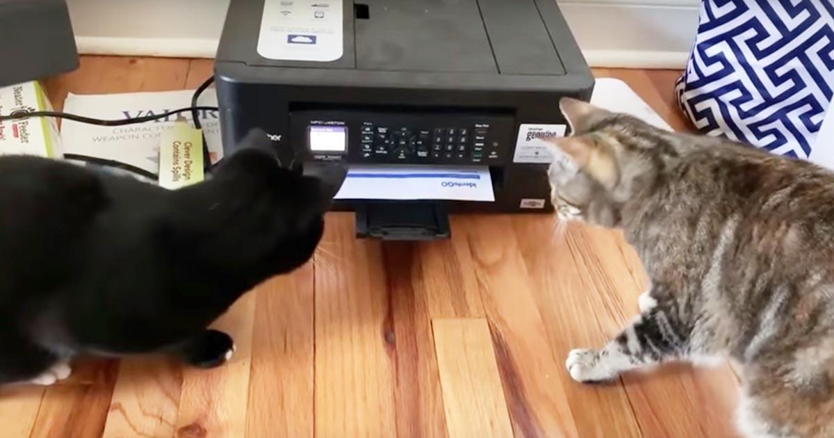 印刷中のプリンターを見た猫のリアクションが可愛すぎると話題に!
